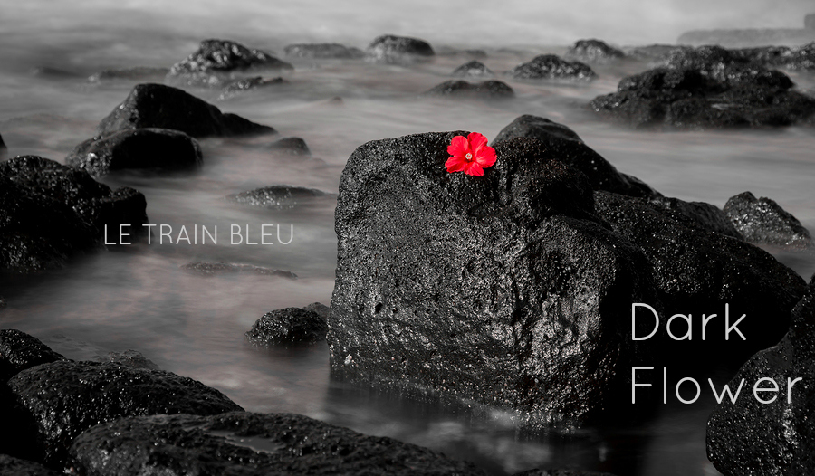 A black and white long exposure of ocean waves flowing over volcanic rock contrasted with the red Hyacinth.